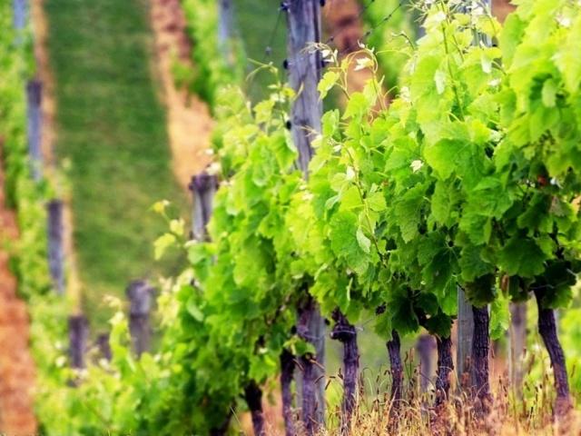 Trances of Winery in Armenia