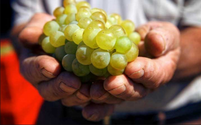 History in a Glass: (Re)discovering Armenian Wine